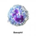 Ricerca 2004 - Confermati gli effetti delle alte diluizioni di istamina (oltre il numero di Avogadro) sull'attivazione dei Basofili umani: 3 diversi tipi di esperimenti attestano i risultati mediante citometria a flusso