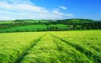 campi verdi