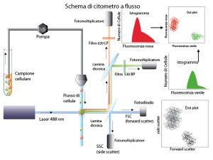 citometria a flusso schema