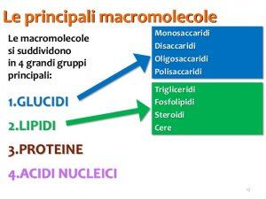 macromolecole biomolecole-